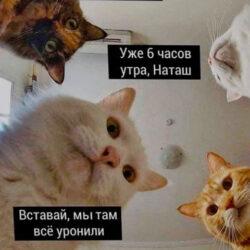 ВСТАВАЙ, МЫ ТАМ ВСЁ УРОНИЛИ :)